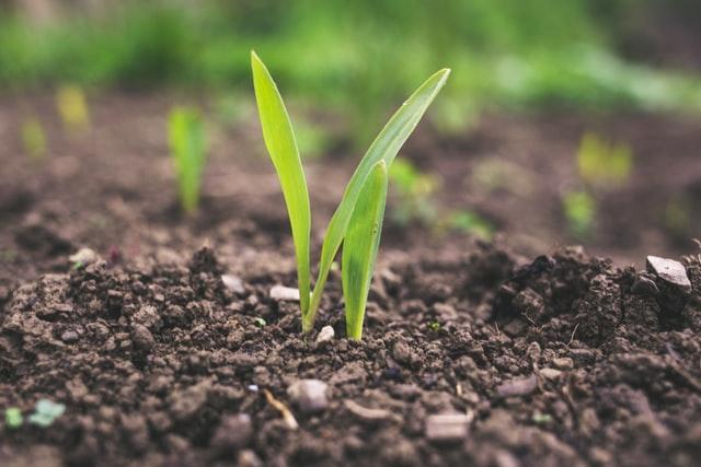 Jak prawidłowo aplikować środki ochrony roślin?
